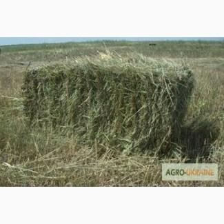 БЕСПЛАТНАЯ доставка сена лугового, люцерны