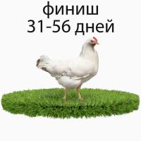 Комбикорм для бройлера финиш ООО ТД ТОРМИКС
