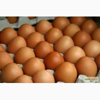 Продам яйца куриные первый сорт оптом