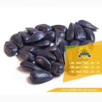 Семена подсолнечника / Насіння соняшника Форвард