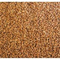 Продам пшеницу - 400 тонн