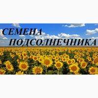 Семена подсолнечника Сингента, Лимагрейн, Пионер, Нови Сад