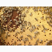 Продам бджолопакети на весну 2018 року
