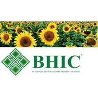 Продам насіння гібридів соняшника ВНІС 2017 року урожаюВНІС
