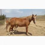 Продам рабочую лошадь