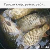 Продам живую речную рыбу малька:. линь, щука, карп карась, амур, сом