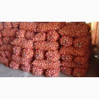 Продам лук сорт Хайденс, холодильное хранение