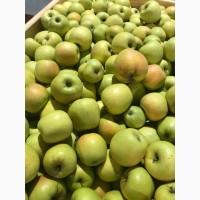 Яблука газовані з холодильника!Дуже хорошої якості