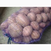 Продам картофель сорт Белая росса Славянка