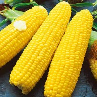 Кукуруза фураж на экспорт