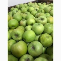Продаємо яблука фрешовані.З холодильника.Фуджі та Грені