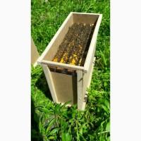 Пчелопакеты от производителя на весну 2021 года с Доставкой