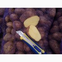 Картофель оптом цена 5 грн без предоплаты