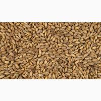 Продам фуражный ячмень затаренный в полипропиленовых мешках, цена 4700 грн/т