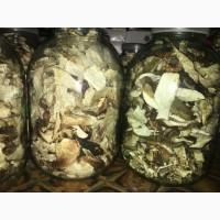 Продам Карпатські білі сушені гриби