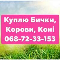 Купую ВРХ та Коні (Жмеринка, Літин, Бар, Хмільник)