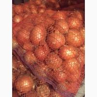 Продам лук репчатый 3.5 грн