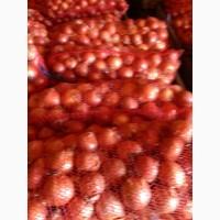 Продам товарный лук сорт Медуза