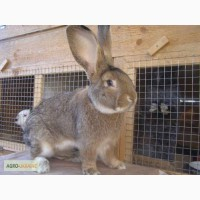Кролики різних порід