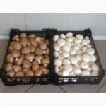 Купим грибы свежие и консервированные