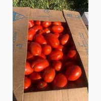 Продам помидор