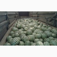 Продам импортний арбуз, вес от 5 кг, цена 5.5 грн