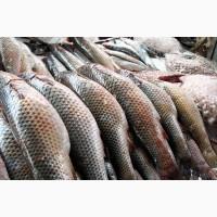 Купим товарную рыбу