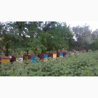 Пчелосеми Пчелопакеты Отводки Одеская обл