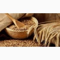 Закуповую зернові