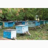 Продам бджіл 2020