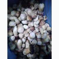 Продам заморожений білий гриб