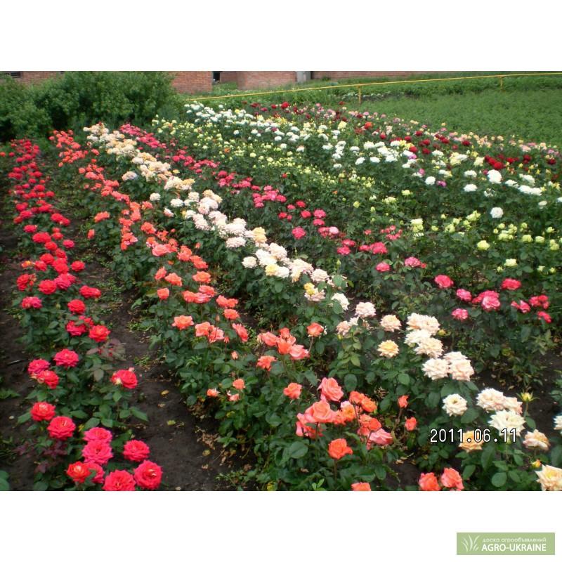 Как заказать саженцы цветов цветы с доставкой в каменске-шахтинском