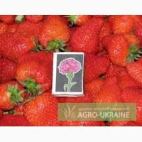 Ищем покупателей на ягоду клубники оптом в 2013 с поля в Крыму