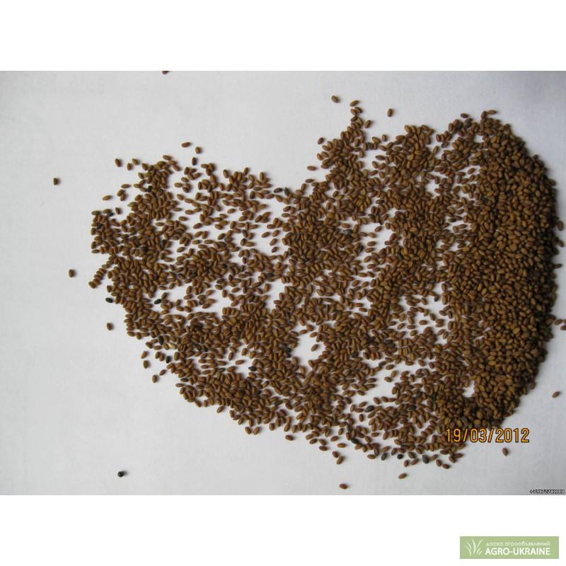 семена рыжика купить
