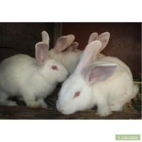 Племенные кроли разных пород