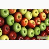 Предприятие закупает яблоки