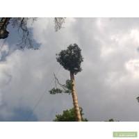 Срезание деревьев Киев. Корчевание пней.