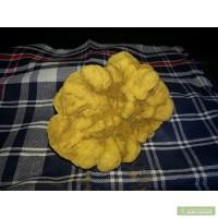 Продам грибы белый трюфель