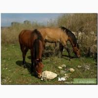 Продам лошадей в Крыму!!!