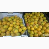 Ящики для абрикос