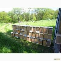 Пчелиные пакеты / пчелопакеты в Днепропетровской на весну 2021 года с доставкой