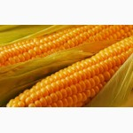 Куплю пшеницу, кукурузу, ячмень ОПТОМ
