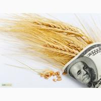 Закупаем пшеницу по Украине, расчет сразу