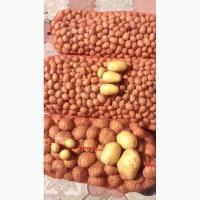 Продам картофель Кубанка Импала Ривьера Лимонка