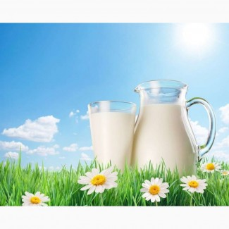 Куплю коровье молоко от 50 литров