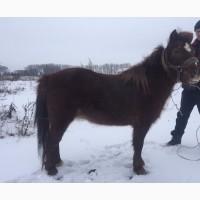 Пони кобылы лошади