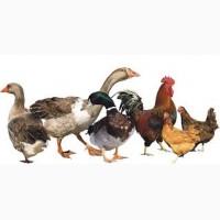 Продам комбікорм для птиці