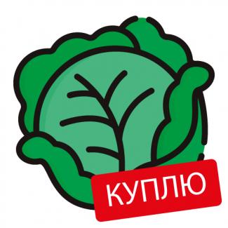 Закупаем белокочанную капусту оптом