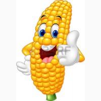 Принимаем кукурузу