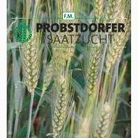 Семена озимой пшеницы Галлио, Адессо, Роланд (Австрия)